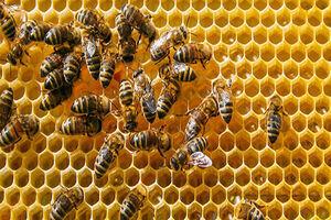 عسل ایرانی با بستهبندی خارجی/ سودی که عاید همسایه میشود