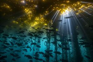 عکس/ اعماق اقیانوس از نگاه عکاسان