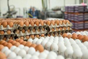 آغاز عرضه تخم مرغ شانهای ۳۴۰۰۰ تومان