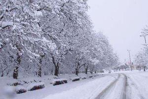 عکس/ بارش برف زمستانی در سوادکوه