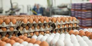تخم مرغ دانهای ۲ هزار تومان