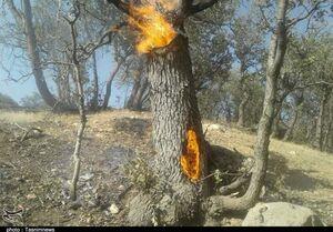نابودی جنگلهای مازندران در یک سهل انگاری ساده/ کسی نیست تا نبض حیات جنگلهای هیرکانی را بگیرد