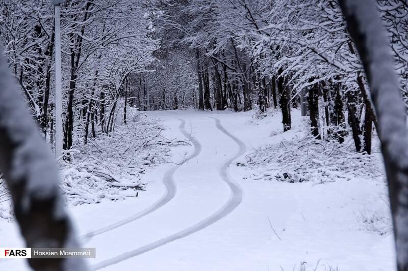 برف در جنگل باباامان بجنورد