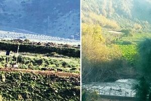 گاودزدی نظامیان رژیم صهیونیستی از لبنان +فیلم