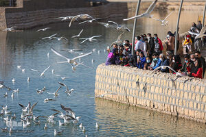 عکس/ مهمانان این روزهای رودخانه شیراز