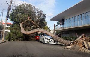 عکس/ شکستن قامت درختان تنومد بر اثر طوفان