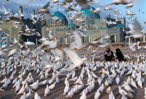 عکس/ پرواز کبوترها در مسجد آبی افغانستان