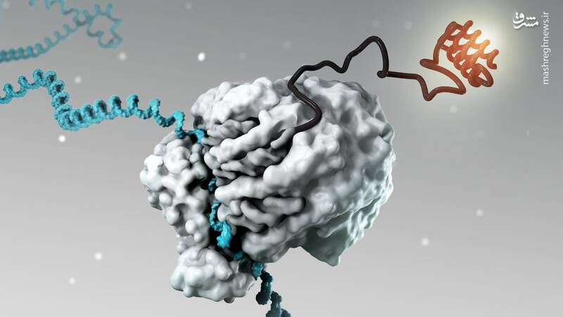 واکسن کووید مبتنی بر mRNA بسیار خطرناک است / واکسنهای مدرنا و فایزر باعث ایجاد پاتوژن و بیماری میشوند