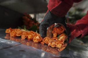 عکس/ گلخانه گل رز در کلمبیا