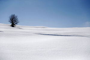 عکس/ لبنان سفید پوش شد
