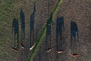 تصویر هوایی جالب از اسبها