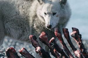 عکس/ نگاه سگ به لاشه شکار شده