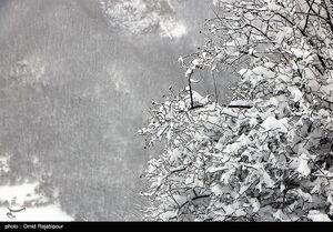 بارش برف، باران و وزش باد شدید از پنجشنبه