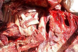 کشف ۵۰۰ کیلو گرم گوشت فاسد در قرچک - کراپشده