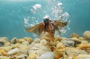 عکس/ لحظه شکار ماهی در زیر آب