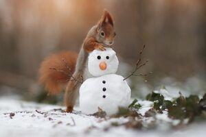 سنجاب بازیگوش و آدم برفی