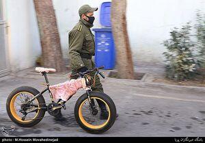 عکس/ دستگیری سارقان دوچرخه