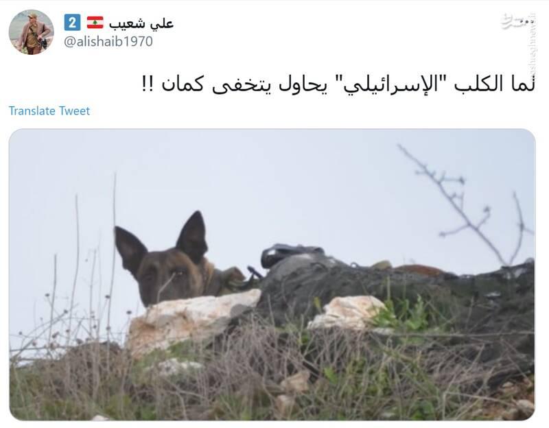 وقتی سگ اسرائیلی هم خود را پنهان کند! +عکس