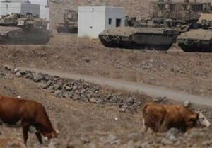 ۷ گاو بازداشتی