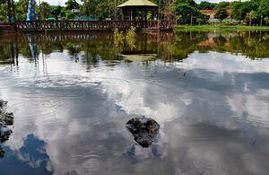 عکس/ شنای تمساح در دریاچه