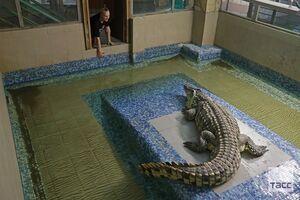 عکس/ مزرعه پرورش تمساح را دیدهاید؟