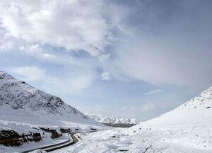 فیلم/ بارش برف یک گاوداری را دفن کرد!