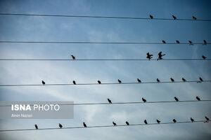 عکس/ پرندگان تالاب «هورالعظیم»