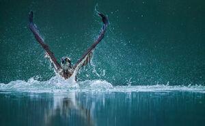 پرنده شکارچی