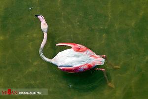 عکس/ میانکاله قتلگاه پرندگان مهاجر