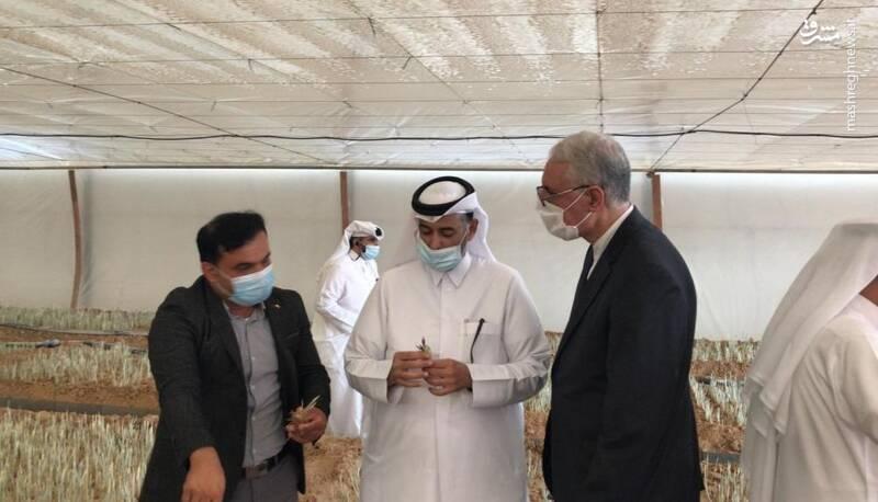 «زعفران قطری» جدیدترین شاهکار دولت/ خروج ذخایر ژنتیکی گیاهان بومی ایران با چه مجوزی انجام شده است؟