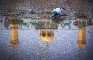 عکس/ بارش باران در کربلا