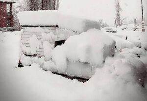 عکس/ بارش برف در دربندسر