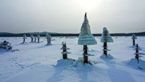 عکس/ قارچهای یخ زده