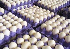 درج قیمت ۱۱۰۰ تومانی بر روی هر تخم مرغ الزامی شد