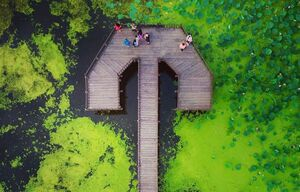 پل چوبی آبکنار  در انزلی