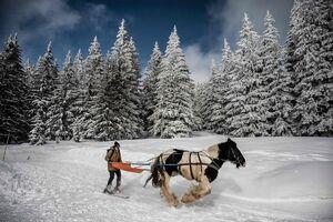 عکس/ اسکی با اسب