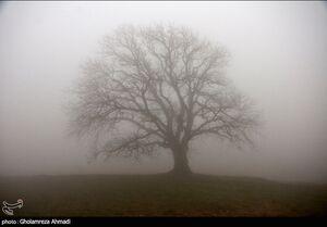 عکس/ درختان در مه زمستانی
