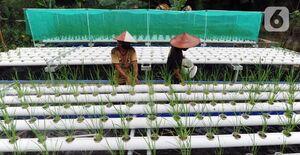 تولید برنج به روش مدرن در اندونزی