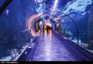 عکس/ بزرگترین آکواریوم ایران در منطقه آزاد انزلی