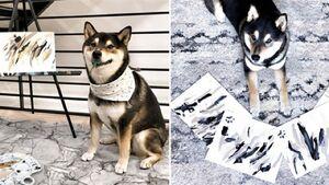 فروش چند هزار دلاری نقاشیهای یک سگ! + فیلم