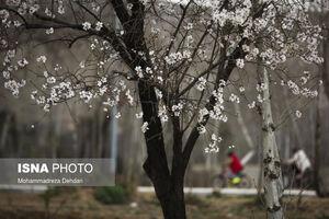 گشتوگذاری در باغهای شیراز +فیلم