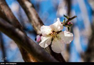 عکس/ شکوفههای رنگارنگ