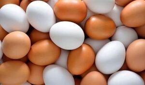 قیمت هر شانه تخممرغ ۳هزار تومان کم شد