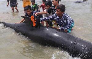 عکس/ نجات نهنگهای به گل نشسته