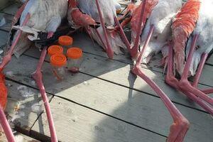 تلف شدن 14 هزار پرندگان در میانکاله طی 25 روز - کراپشده