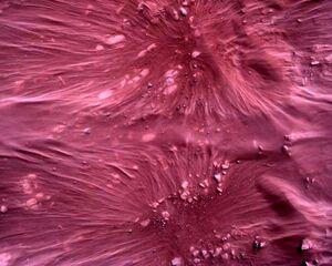 تصاویر جدید ناسا از مریخ