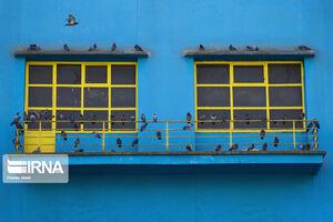 عکس/ مهربانی با پرندگان در سرمای زمستان