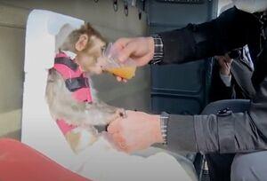وقتی اثبات نظریه بدل داشتن میمون مسئله بود+عکس