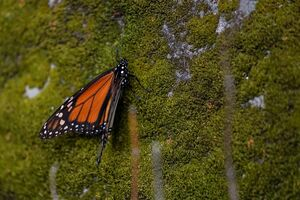 خواب زمستانی پروانهها در جنگل
