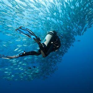 عکس/ غواصی در آب های فیلیپین